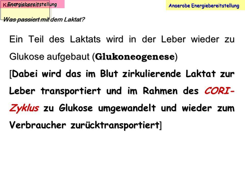 Karl-Franzens: Energiebereitstellung Anaerobe Energiebereitstellung Was passiert mit dem Laktat? Ein Teil des Laktats wird in der Leber wieder zu Gluk