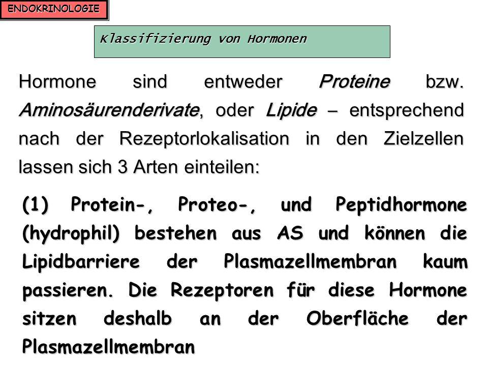 ENDOKRINOLOGIE Klassifizierung von Hormonen Hormone sind entweder Proteine bzw. Aminosäurenderivate, oder Lipide – entsprechend nach der Rezeptorlokal