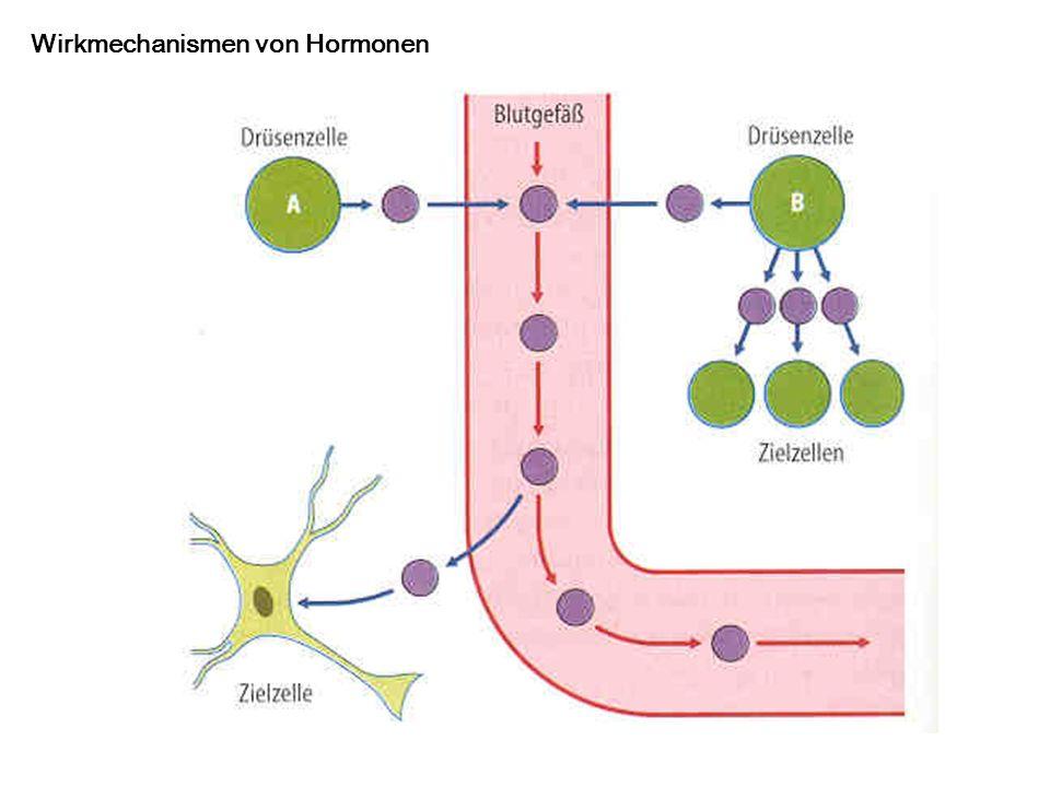 Wirkmechanismen von Hormonen