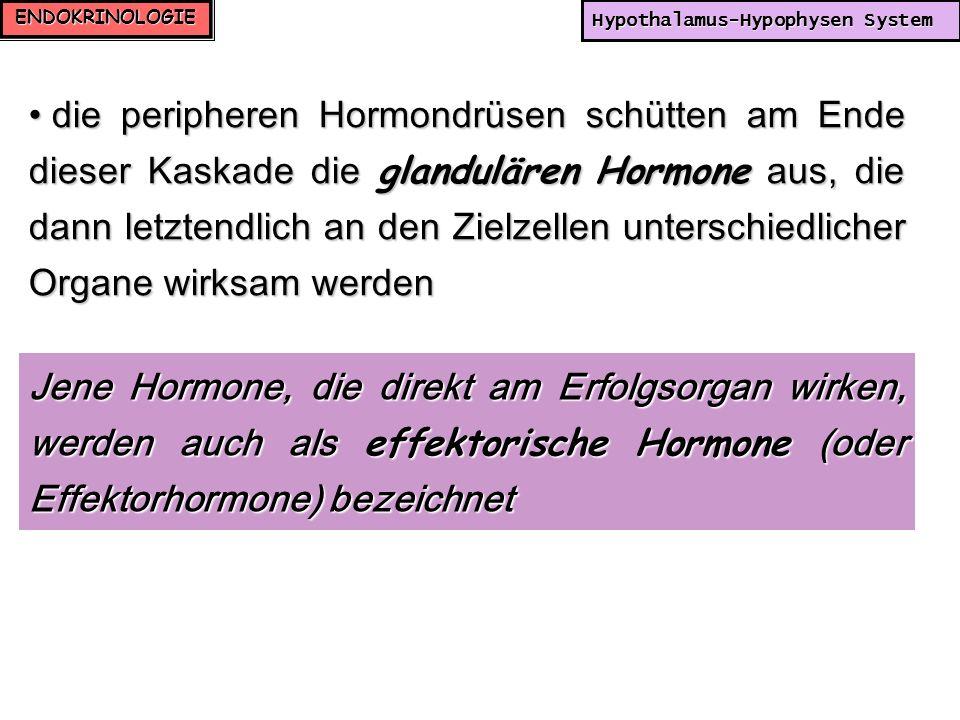 ENDOKRINOLOGIE Hypothalamus-Hypophysen System die peripheren Hormondrüsen schütten am Ende dieser Kaskade die glandulären Hormone aus, die dann letzte