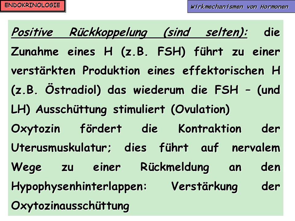 ENDOKRINOLOGIE Wirkmechanismen von Hormonen Positive Rückkoppelung (sind selten): die Zunahme eines H (z.B. FSH) führt zu einer verstärkten Produktion