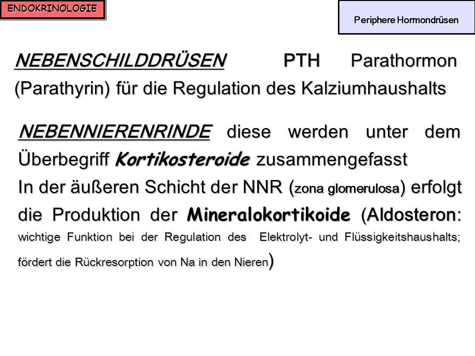 ENDOKRINOLOGIE Periphere Hormondrüsen Periphere Hormondrüsen NEBENSCHILDDRÜSEN PTH Parathormon (Parathyrin) für die Regulation des Kalziumhaushalts NE