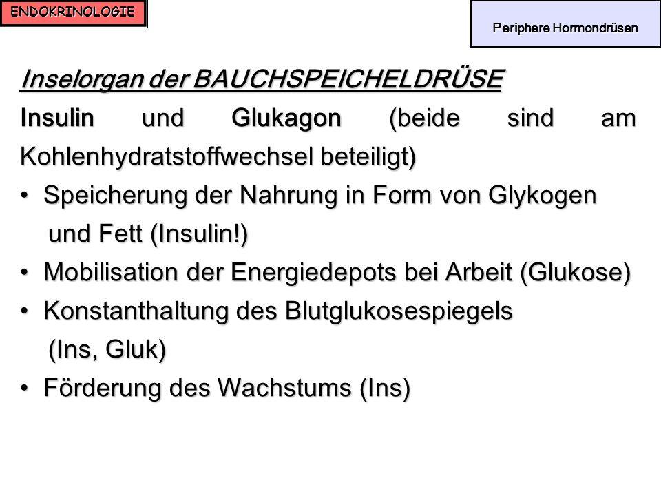 ENDOKRINOLOGIE Periphere Hormondrüsen Periphere Hormondrüsen Inselorgan der BAUCHSPEICHELDRÜSE Insulin und Glukagon (beide sind am Kohlenhydratstoffwe