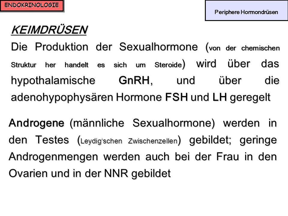 ENDOKRINOLOGIE Periphere Hormondrüsen Periphere Hormondrüsen KEIMDRÜSEN Die Produktion der Sexualhormone ( von der chemischen Struktur her handelt es