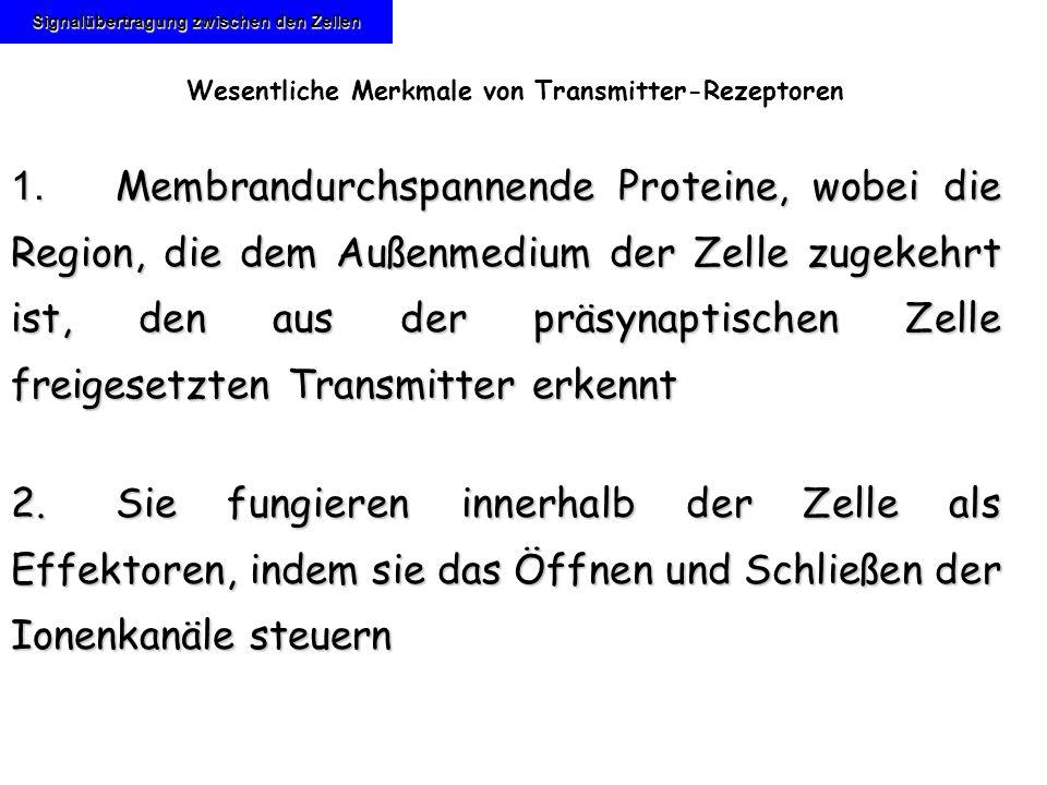 Signalübertragung zwischen den Zellen Wesentliche Merkmale von Transmitter-Rezeptoren 1. Membrandurchspannende Proteine, wobei die Region, die dem Auß