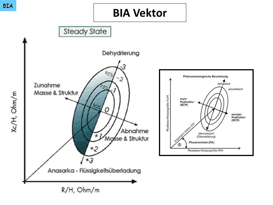 BIA BIA Vektor