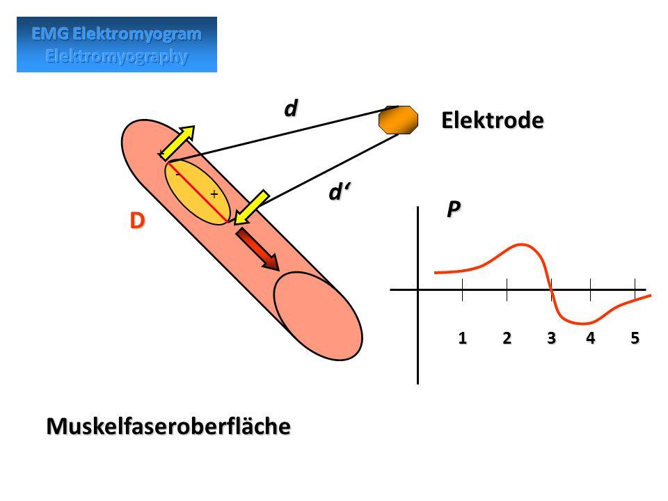Muskelfaseroberfläche Elektrode D d d P 12345 + - +