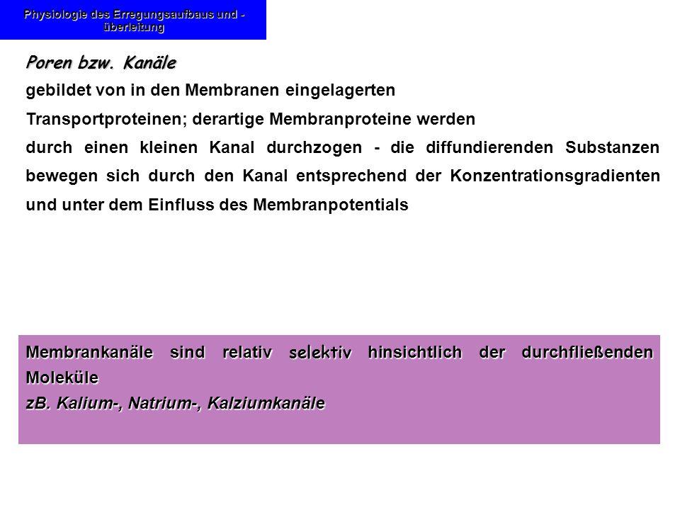 Karl-Franzens: Energiebereitstellung Aufbau der Mitochondrien