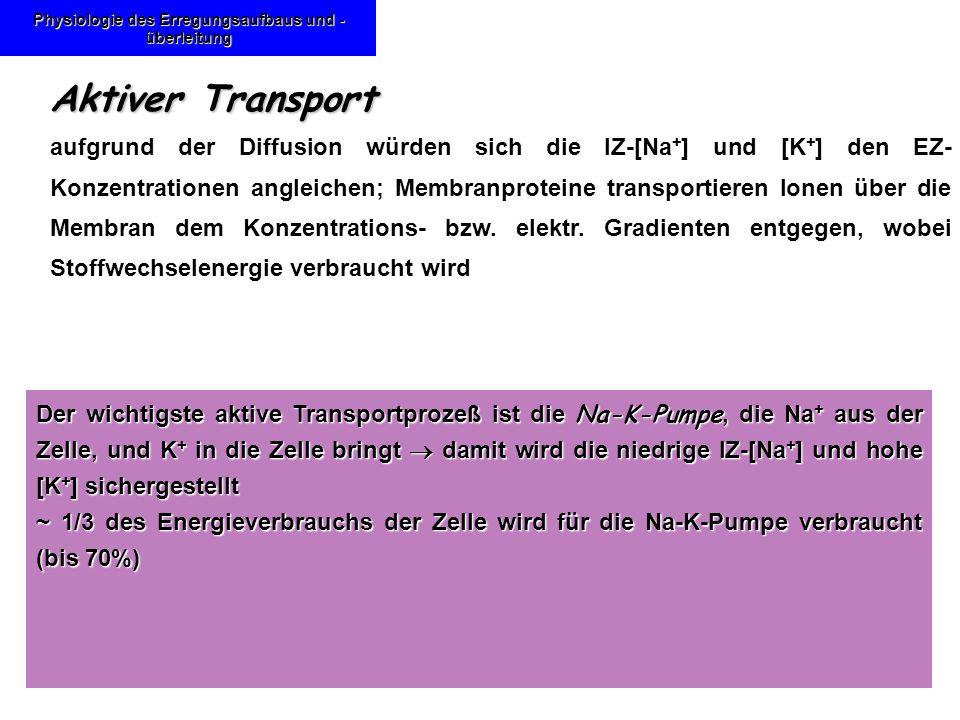 Physiologie des Erregungsaufbaus und - überleitung Aktiver Transport aufgrund der Diffusion würden sich die IZ-[Na + ] und [K + ] den EZ- Konzentratio
