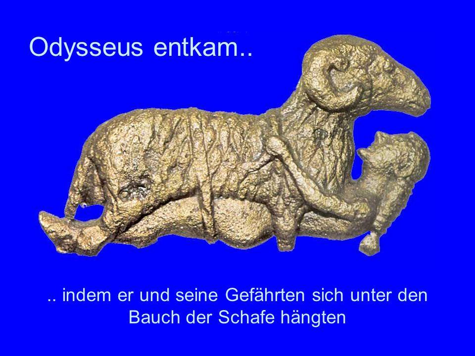 .. indem er und seine Gefährten sich unter den Bauch der Schafe hängten Odysseus entkam..