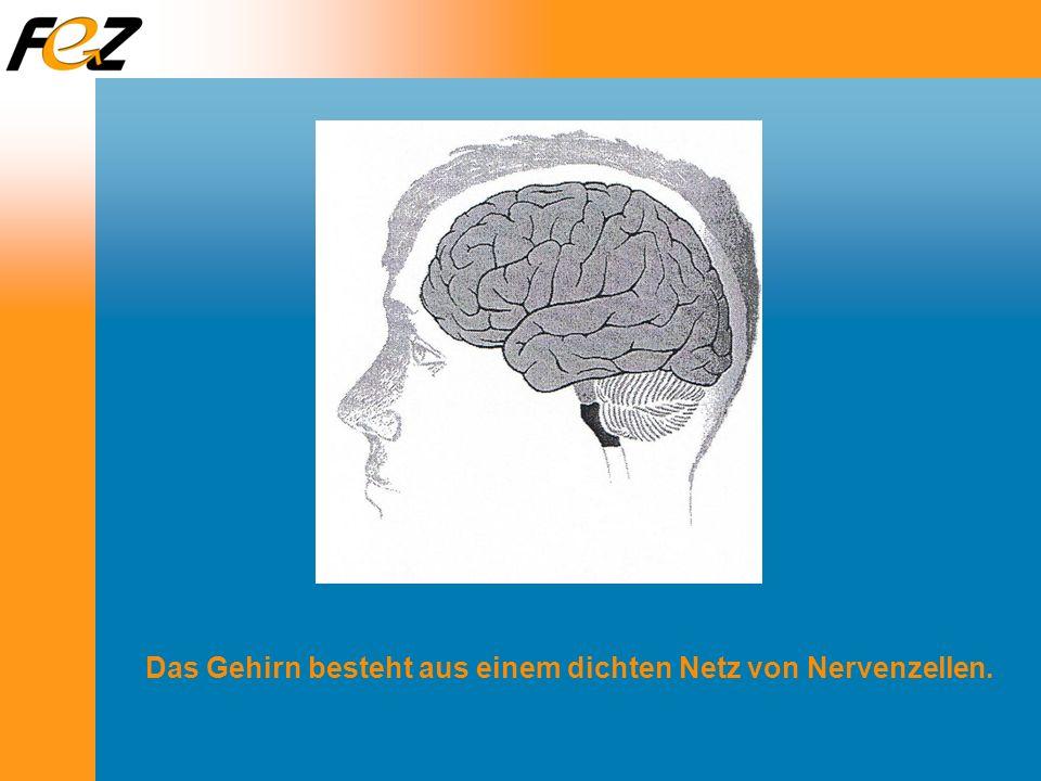 Das Gehirn besteht aus einem dichten Netz von Nervenzellen.