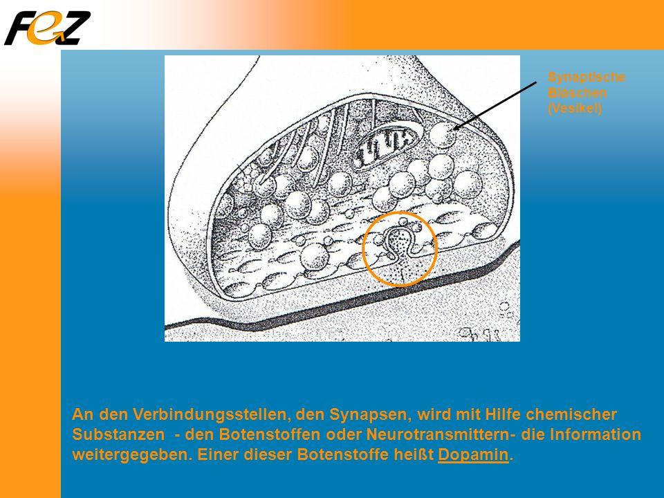 An den Verbindungsstellen, den Synapsen, wird mit Hilfe chemischer Substanzen - den Botenstoffen oder Neurotransmittern- die Information weitergegeben