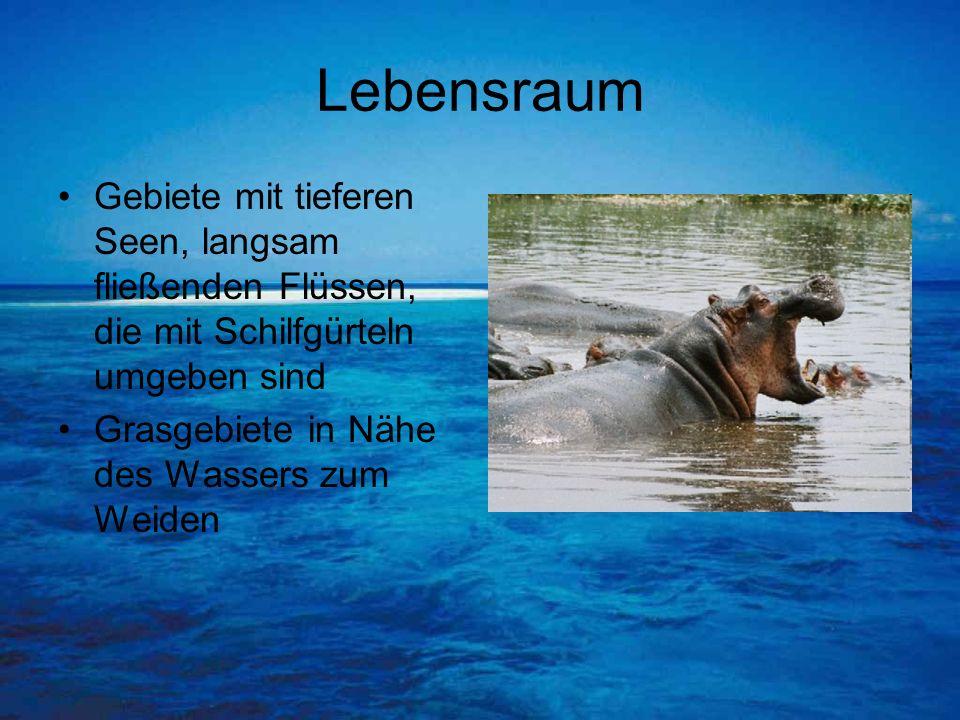Fortbewegung Meistens laufen sie auf dem Grund eines Gewässers entlang oder lassen sich vom Wasser tragen Fortbewegungsart wird als Schwimmlaufen bezeichnet Tauchgänge dauern meistens 5 Minuten