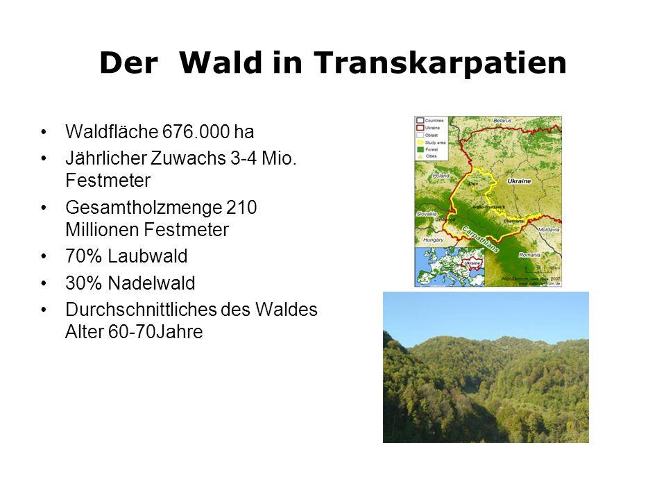 Der Wald in Transkarpatien Waldfläche 676.000 ha Jährlicher Zuwachs 3-4 Mio. Festmeter Gesamtholzmenge 210 Millionen Festmeter 70% Laubwald 30% Nadelw