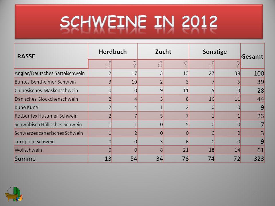 RASSE HerdbuchZuchtSonstige Gesamt Angler/Deutsches Sattelschwein2173132738 100 Buntes Bentheimer Schwein3192375 39 Chinesisches Maskenschwein0091153