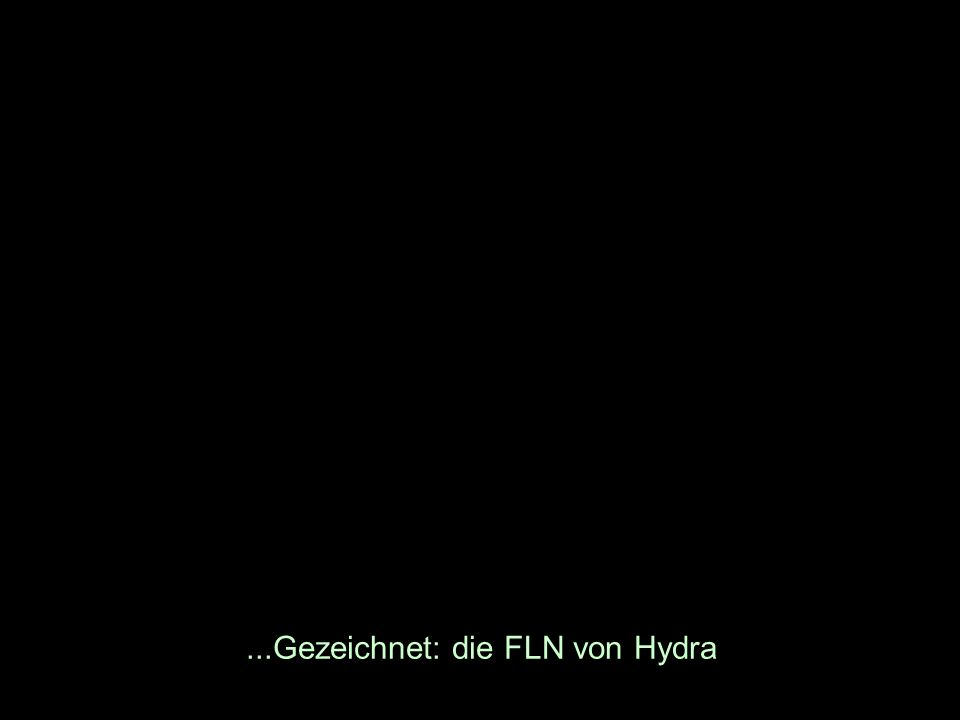 ...Gezeichnet: die FLN von Hydra