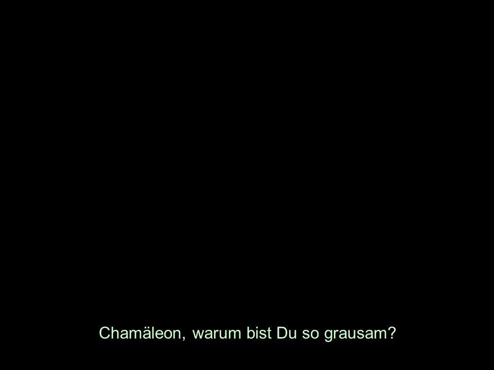 Chamäleon, warum bist Du so grausam