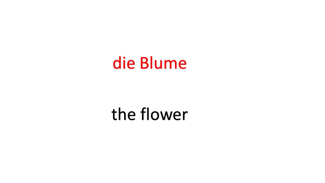 die Blume the flower