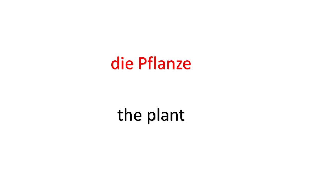 die Pflanze the plant