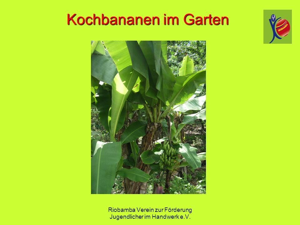 Riobamba Verein zur F ö rderung Jugendlicher im Handwerk e.V. Kochbananen im Garten