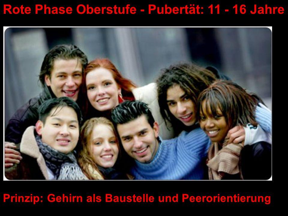Prinzip: Gehirn als Baustelle und Peerorientierung Rote Phase Oberstufe - Pubertät: 11 - 16 Jahre