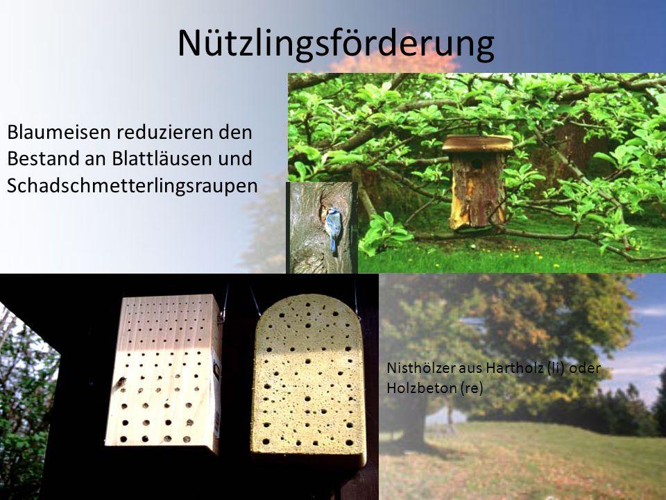 Nützlingsförderung Blaumeisen reduzieren den Bestand an Blattläusen und Schadschmetterlingsraupen Nisthölzer aus Hartholz (li) oder Holzbeton (re)