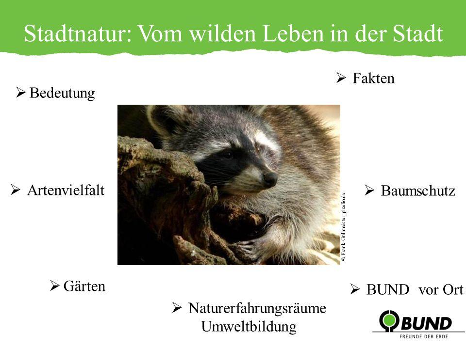 Städte – Orte biologischer Vielfalt 30 Säugetierarten ca.