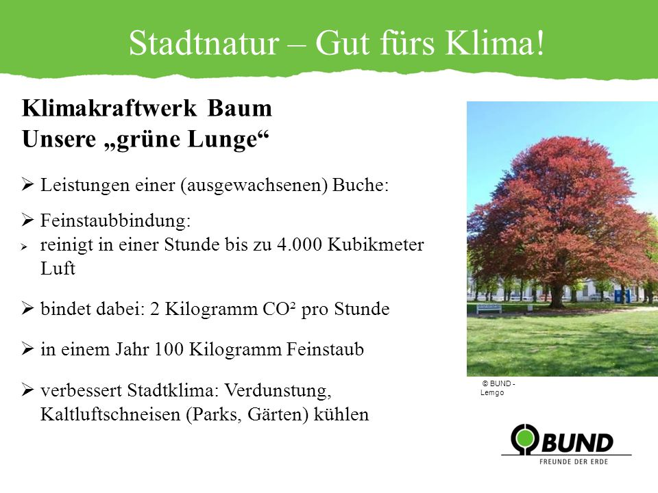 Stadtnatur – Gut fürs Klima! Leistungen einer (ausgewachsenen) Buche: Feinstaubbindung: reinigt in einer Stunde bis zu 4.000 Kubikmeter Luft bindet da