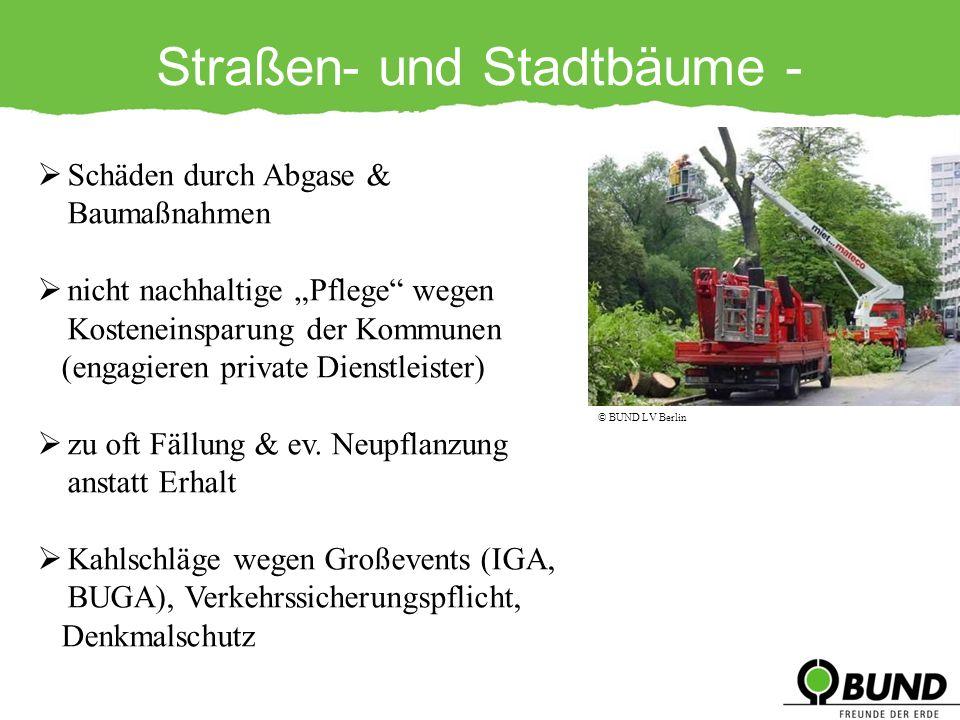 Straßen- und Stadtbäume - Gefährdungen Schäden durch Abgase & Baumaßnahmen nicht nachhaltige Pflege wegen Kosteneinsparung der Kommunen (engagieren pr