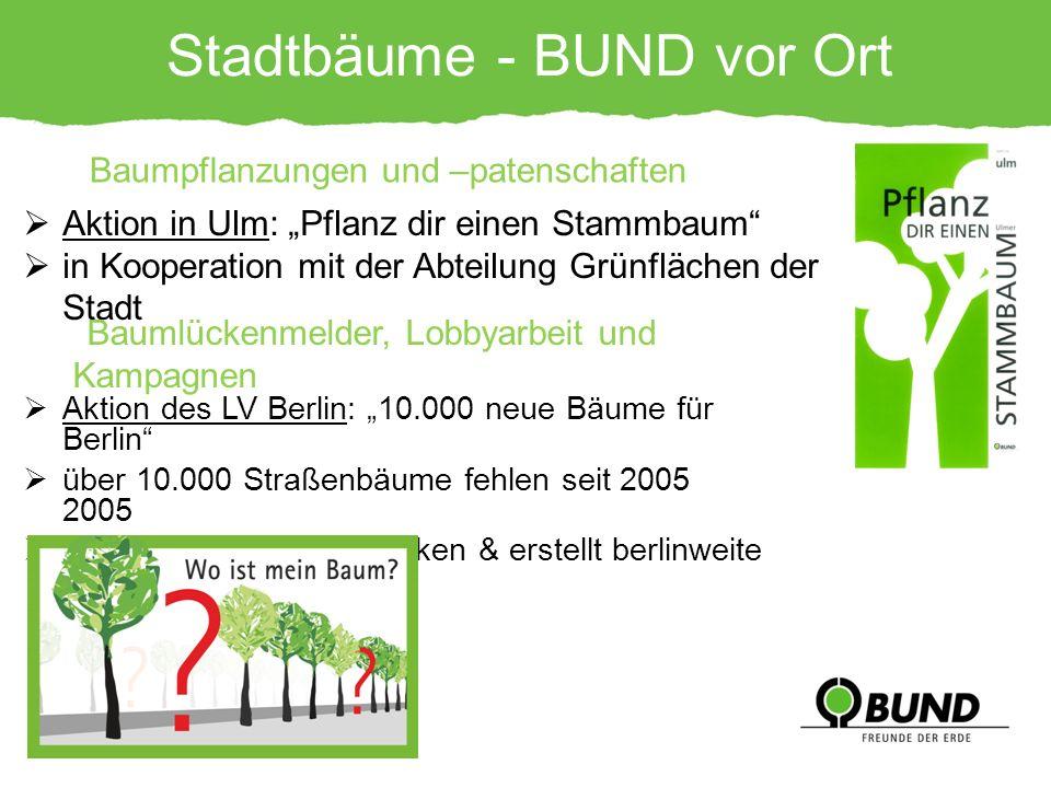 Aktion des LV Berlin: 10.000 neue Bäume für Berlin über 10.000 Straßenbäume fehlen seit 2005 BUND sammelt Baumlücken & erstellt berlinweite Karte Stad