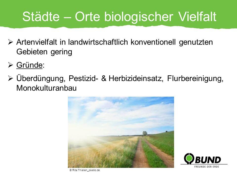 Städte – Orte biologischer Vielfalt Artenvielfalt in landwirtschaftlich konventionell genutzten Gebieten gering Gründe: Überdüngung, Pestizid- & Herbi