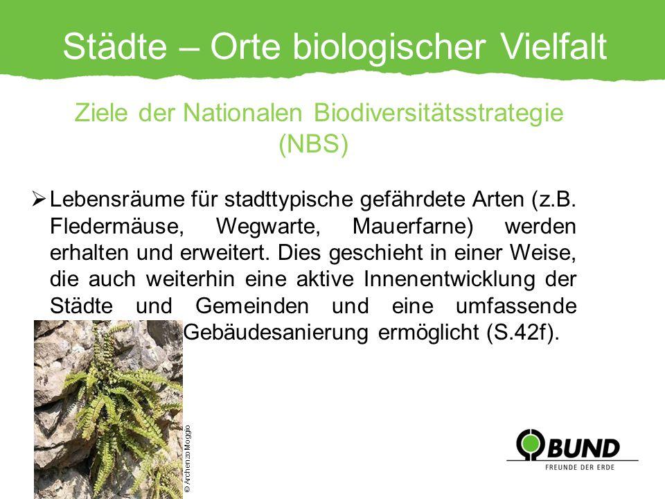 Städte – Orte biologischer Vielfalt Ziele der Nationalen Biodiversitätsstrategie (NBS) Lebensräume für stadttypische gefährdete Arten (z.B. Fledermäus