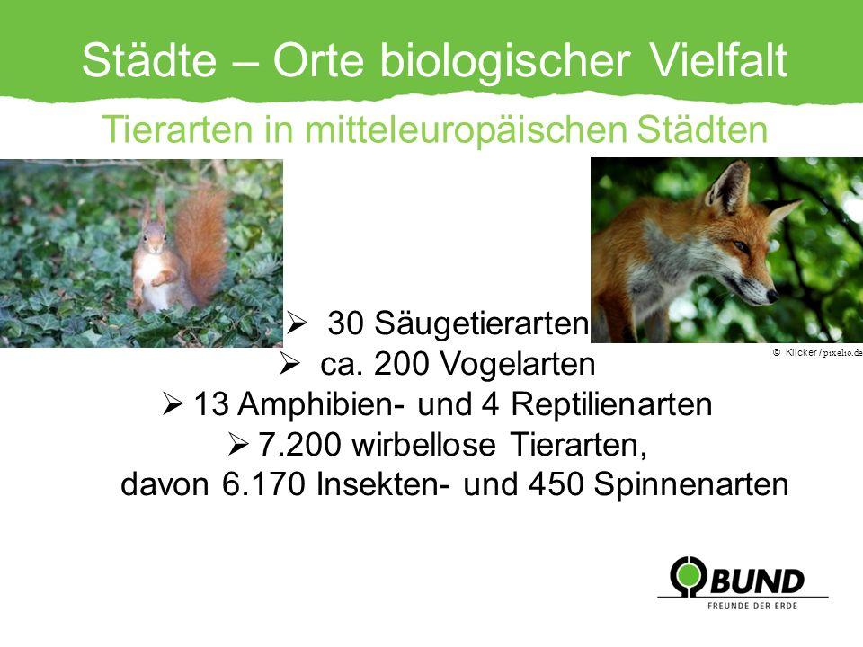 Städte – Orte biologischer Vielfalt 30 Säugetierarten ca. 200 Vogelarten 13 Amphibien- und 4 Reptilienarten 7.200 wirbellose Tierarten, davon 6.170 In