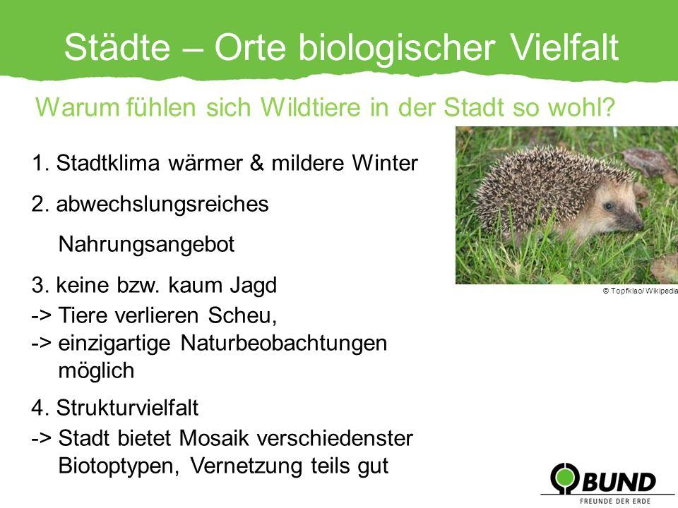 Städte – Orte biologischer Vielfalt 1. Stadtklima wärmer & mildere Winter 2. abwechslungsreiches Nahrungsangebot 3. keine bzw. kaum Jagd -> Tiere verl
