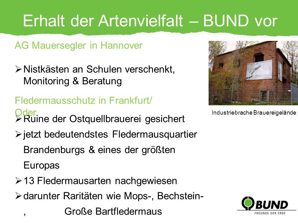 Erhalt der Artenvielfalt – BUND vor Ort AG Mauersegler in Hannover Nistkästen an Schulen verschenkt, Monitoring & Beratung Ruine der Ostquellbrauerei