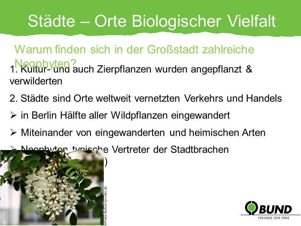 Städte – Orte Biologischer Vielfalt 1. Kultur- und auch Zierpflanzen wurden angepflanzt & verwilderten 2. Städte sind Orte weltweit vernetzten Verkehr