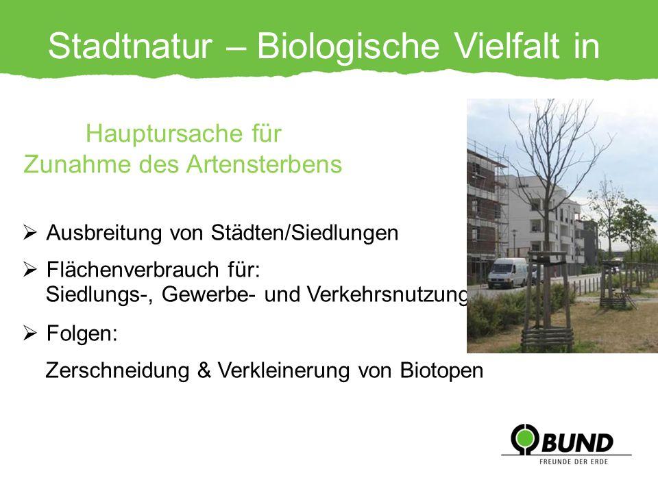 Stadtnatur – Biologische Vielfalt in Gefahr! Ausbreitung von Städten/Siedlungen Flächenverbrauch für: Siedlungs-, Gewerbe- und Verkehrsnutzungen Folge