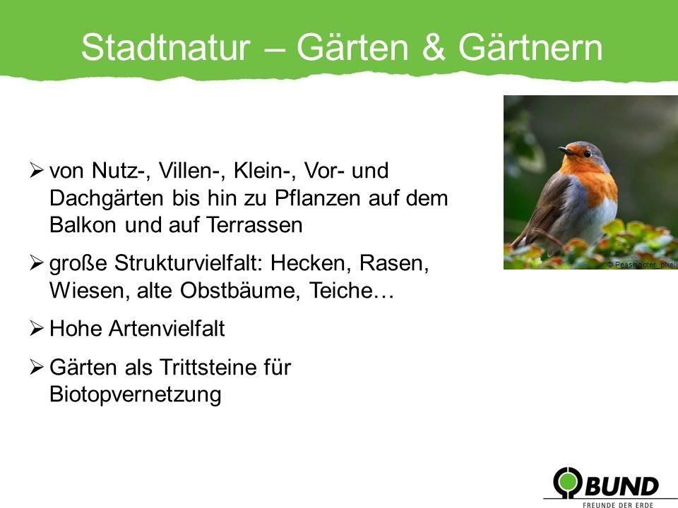 Stadtnatur – Gärten & Gärtnern © Peashooter_pixelio.de von Nutz-, Villen-, Klein-, Vor- und Dachgärten bis hin zu Pflanzen auf dem Balkon und auf Terr