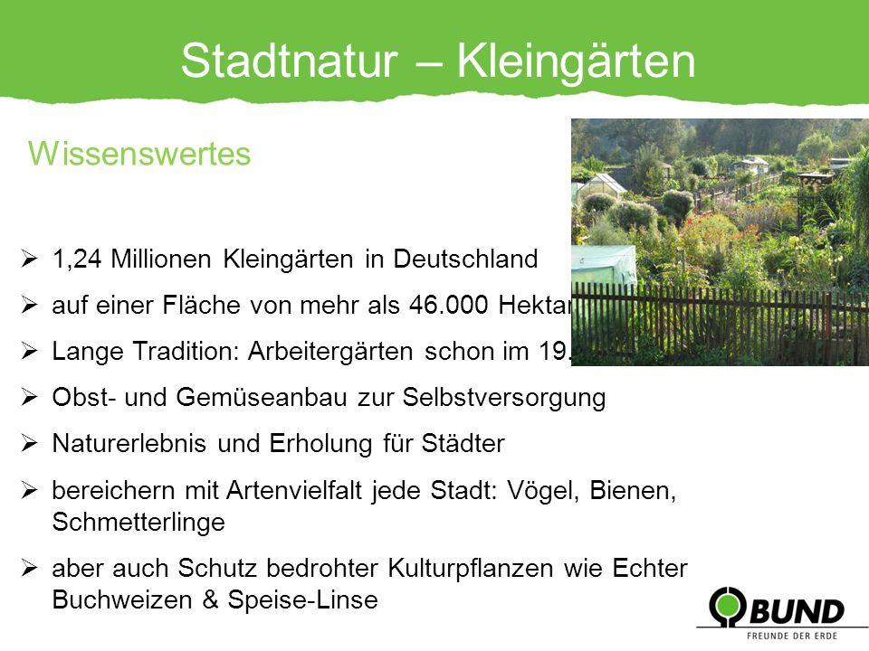 Stadtnatur – Kleingärten 1,24 Millionen Kleingärten in Deutschland auf einer Fläche von mehr als 46.000 Hektar Lange Tradition: Arbeitergärten schon i