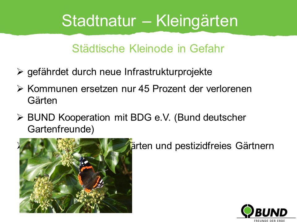 Stadtnatur – Kleingärten gefährdet durch neue Infrastrukturprojekte Kommunen ersetzen nur 45 Prozent der verlorenen Gärten BUND Kooperation mit BDG e.