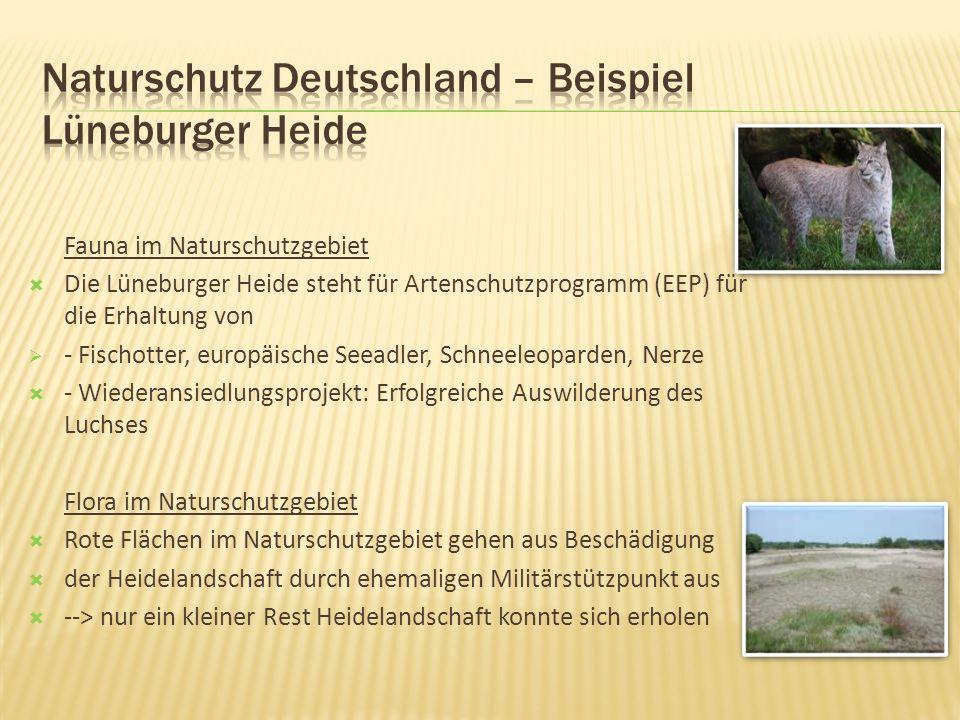 Fauna im Naturschutzgebiet Die Lüneburger Heide steht für Artenschutzprogramm (EEP) für die Erhaltung von - Fischotter, europäische Seeadler, Schneele