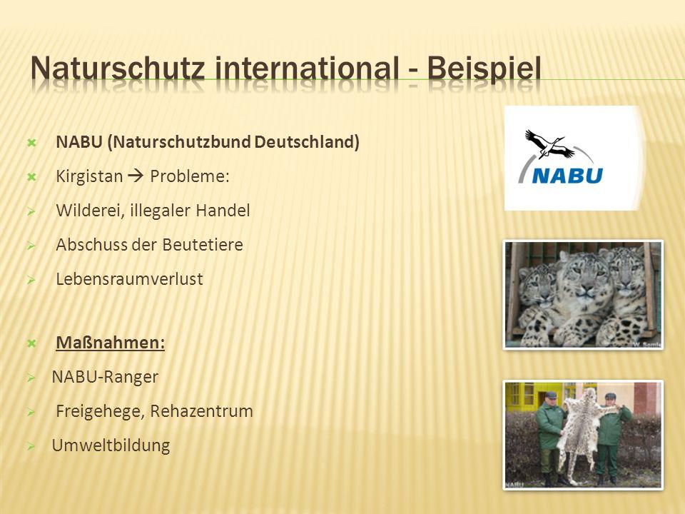 NABU (Naturschutzbund Deutschland) Kirgistan Probleme: Wilderei, illegaler Handel Abschuss der Beutetiere Lebensraumverlust Maßnahmen: NABU-Ranger Freigehege, Rehazentrum Umweltbildung
