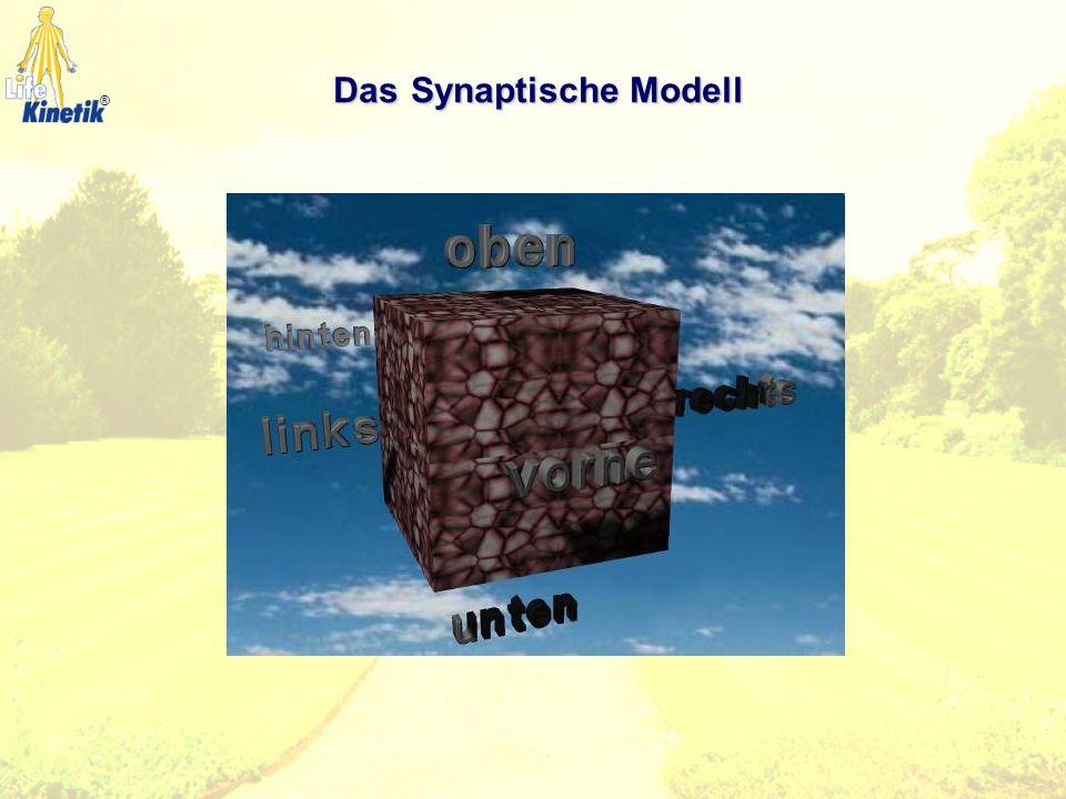 ® DasSynaptische Modell DasSynaptische Modell