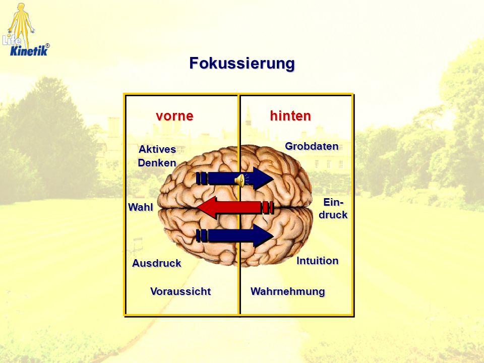 ZentrierungKörperhälften Oberer und Unterer GehirnbereichFokussierenBewegungs-mittellinie Vorder- und HinterhirnLateralität Seitigkeit Seitigkeit Linke und rechte Gehirnhälfte Die Gehirn-Dimensionen ®