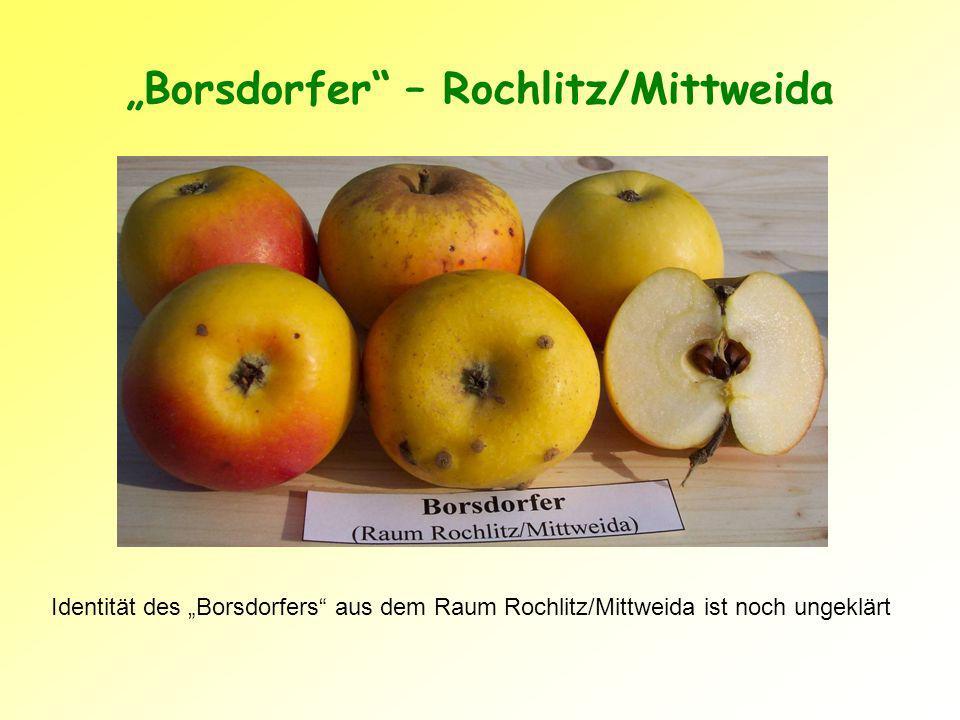 Borsdorfer – Rochlitz/Mittweida Identität des Borsdorfers aus dem Raum Rochlitz/Mittweida ist noch ungeklärt