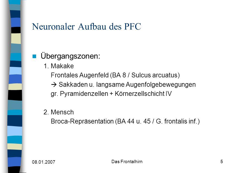 08.01.2007 Das Frontalhirn5 Neuronaler Aufbau des PFC Übergangszonen: 1.Makake Frontales Augenfeld (BA 8 / Sulcus arcuatus) Sakkaden u.