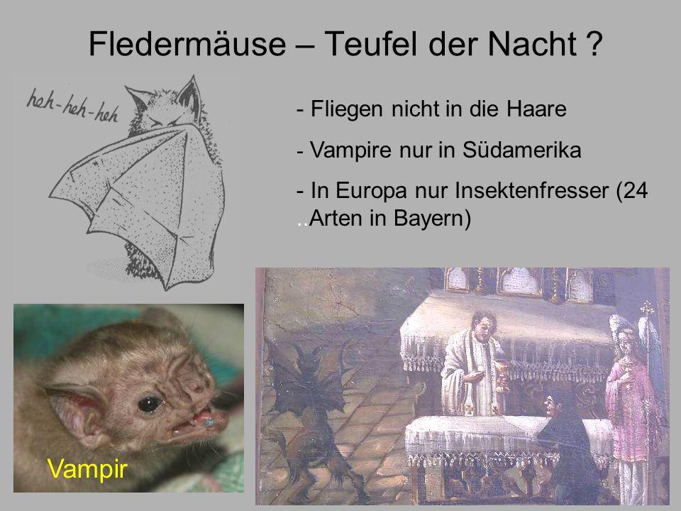 Perfekte Flieger Daumen Hinterfuß Schwanz Flughaut (gut durchblutet) 4.
