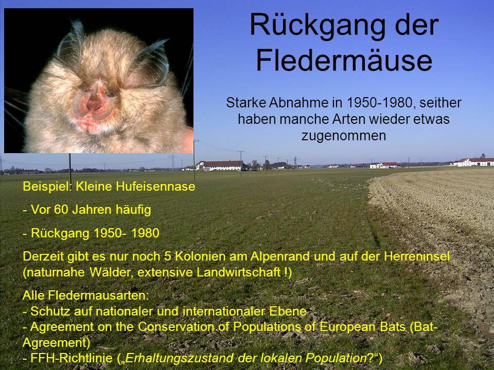 Rückgang der Fledermäuse Starke Abnahme in 1950-1980, seither haben manche Arten wieder etwas zugenommen Beispiel: Kleine Hufeisennase - Vor 60 Jahren