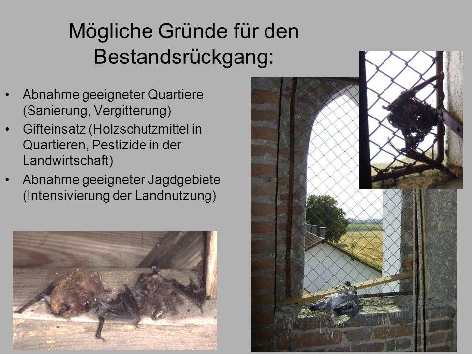 Mögliche Gründe für den Bestandsrückgang: Abnahme geeigneter Quartiere (Sanierung, Vergitterung) Gifteinsatz (Holzschutzmittel in Quartieren, Pestizid