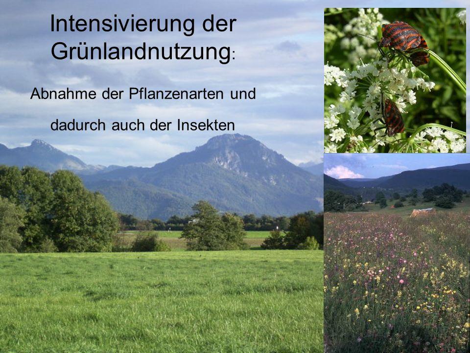 Intensivierung der Grünlandnutzung : Abnahme der Pflanzenarten und dadurch auch der Insekten
